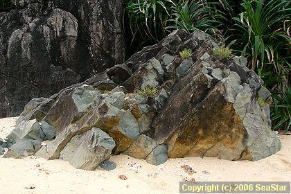 安山岩の柱状節理