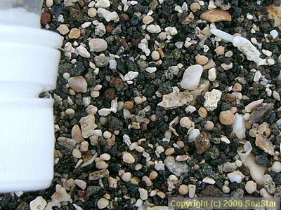 輝石の黒い砂浜