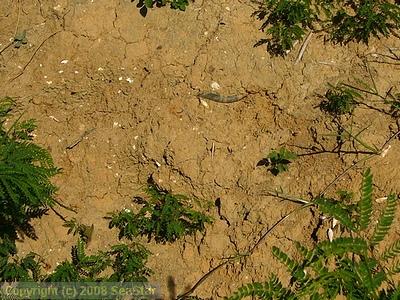 知念砂層中の貝化石