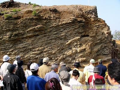 マチナト石灰岩の露頭