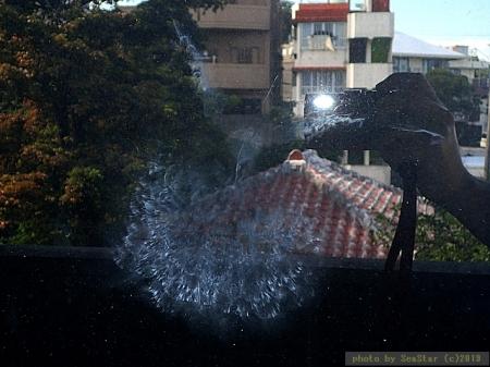 ズアカアオバトの鳥拓,窓ガラスへの衝突痕
